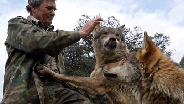 https: img.okeinfo.net content 2019 11 10 196 2128019 aksi-aksi-superdad-nomor-3-ayah-lawan-serigala-untuk-lindungi-keluarga-ZxgU9SKkXt.jpg
