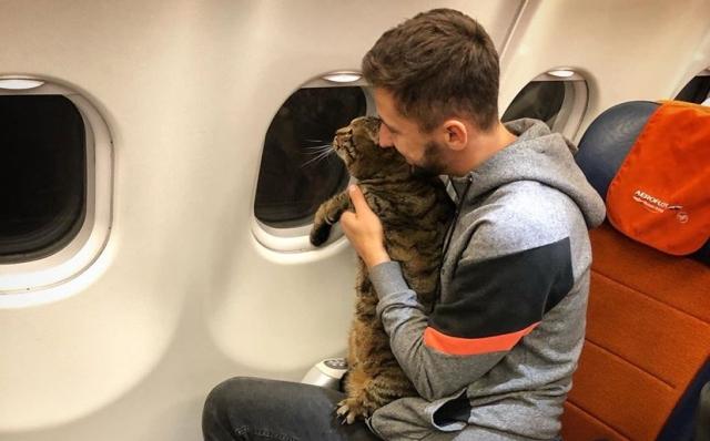 https: img.okeinfo.net content 2019 11 13 18 2129302 seorang-pria-akali-aturan-demi-kucingnya-yang-kegemukan-bisa-naik-kabin-pesawat-jO8lMUthWV.jpg