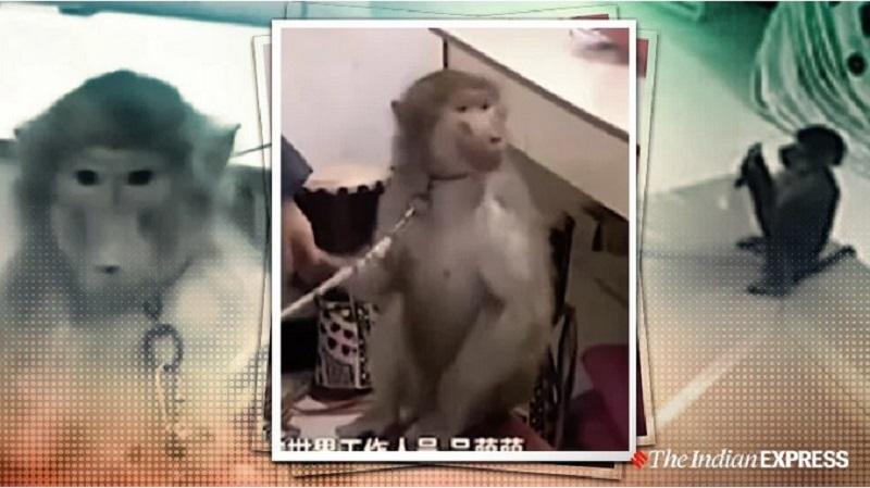 https: img.okeinfo.net content 2019 11 15 612 2130378 aksi-monyet-pintar-pesan-barang-belanjaan-secara-online-0FM3kvUNTU.jpg