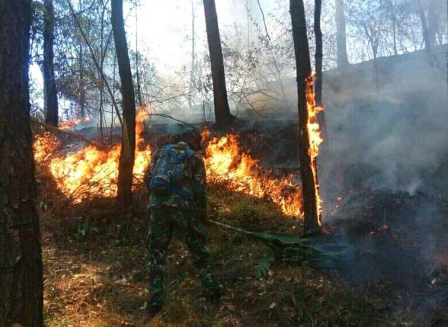 https: img.okeinfo.net content 2019 11 16 512 2130693 kebakaran-di-gunung-lawu-ribuan-orang-dilibatkan-untuk-padamkan-api-H83cNHxoyJ.jpg