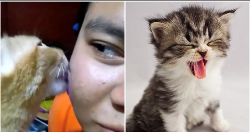 https: img.okeinfo.net content 2019 11 26 611 2134635 tak-perlu-skincare-mahal-gadis-ini-atasi-jerawat-dengan-jilatan-kucing-QgSAOB2Sod.jpg