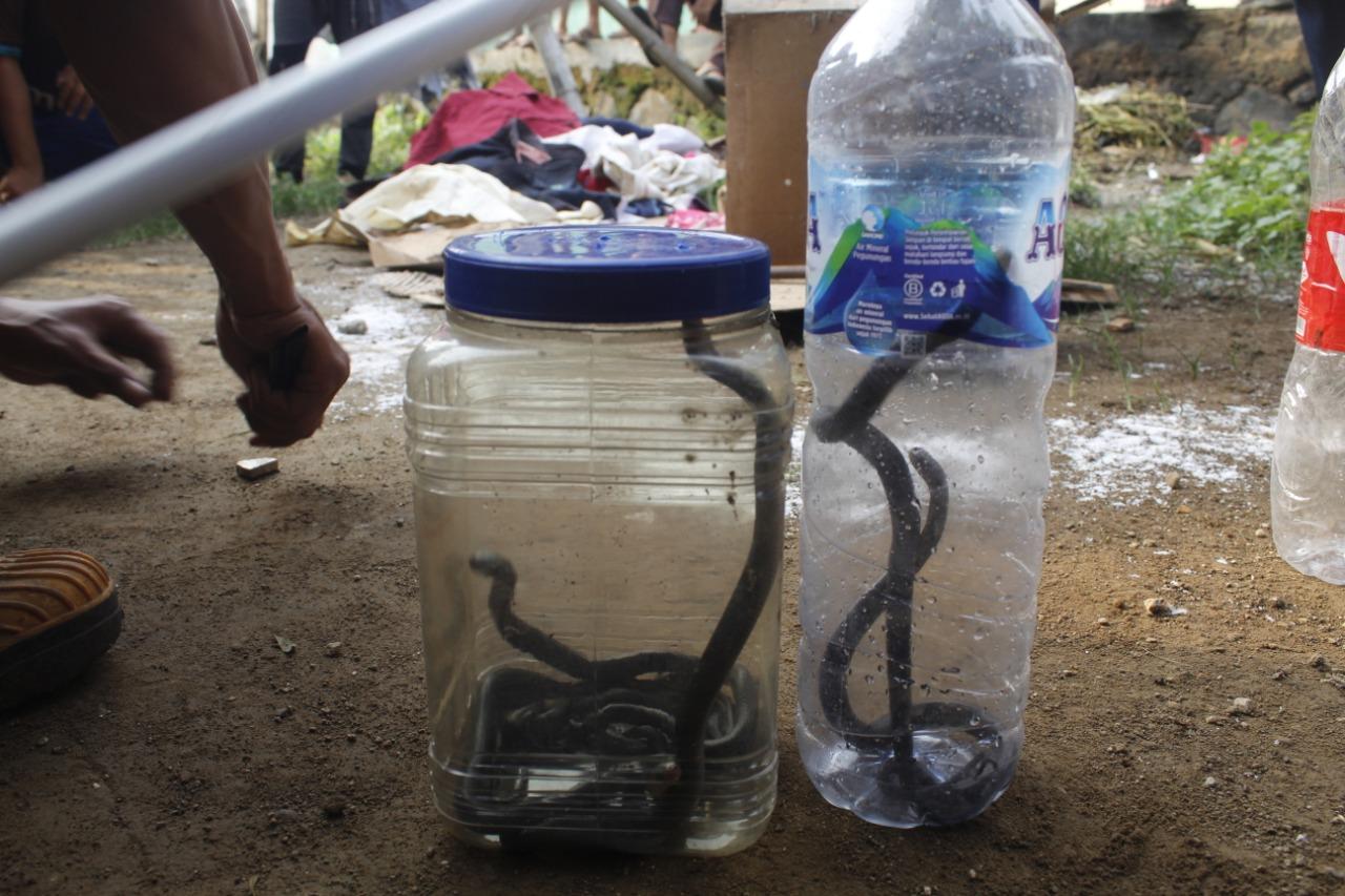 https: img.okeinfo.net content 2019 12 13 525 2141584 puluhan-ular-kobra-teror-warga-purwakarta-yIIFtoUL5m.jpg