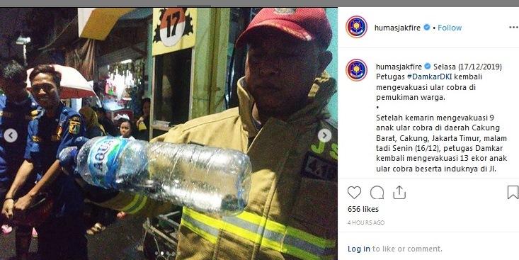 https: img.okeinfo.net content 2019 12 17 338 2142905 damkar-evakuasi-13-ular-kobra-di-pasar-minggu-jaksel-FEiqaNj9YT.jpg