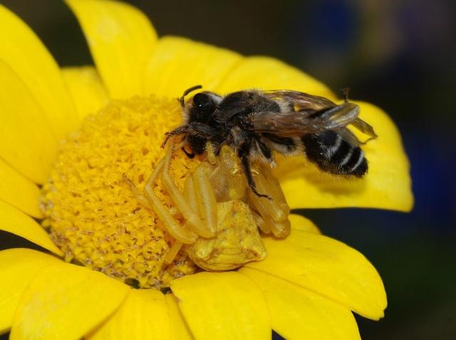 https: img.okeinfo.net content 2019 12 21 18 2144713 seorang-bapak-tewas-disengat-lebah-saat-menghadiri-pemakaman-putranya-9MliZKSEYo.jpg