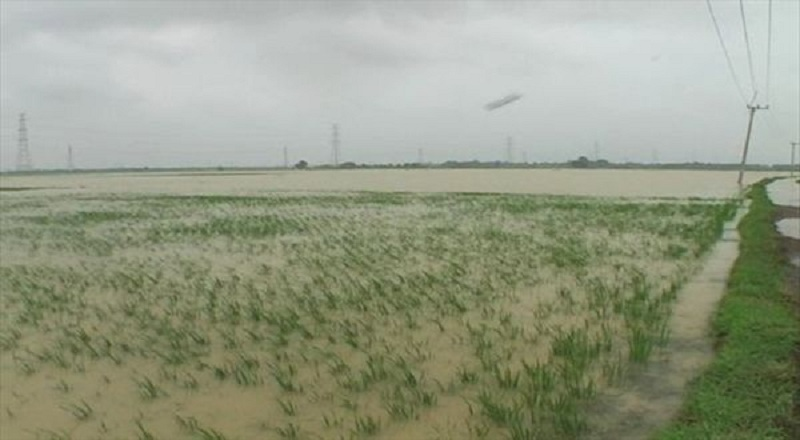 https: img.okeinfo.net content 2020 01 11 340 2151693 849-hektare-sawah-di-lebak-rusak-akibat-banjir-dan-longsor-C5VwESgkoH.jpg