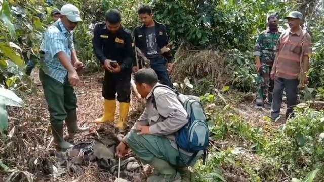 https: img.okeinfo.net content 2020 01 13 340 2152281 bangkai-bayi-gajah-ditemukan-tinggal-tulang-belulang-di-aceh-utara-CWlO1nmDW8.jpg