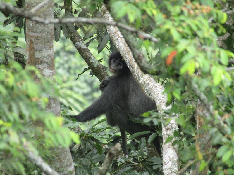 https: img.okeinfo.net content 2020 01 17 56 2154162 monyet-surili-hewan-khas-di-taman-nasional-gunung-ciremai-iAubsYAEYn.jpg