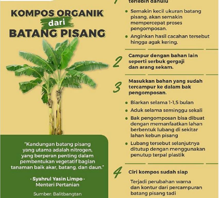 https: img.okeinfo.net content 2020 01 19 320 2155138 batang-pisang-disulap-jadi-kompos-organik-1Jpt9gbUwX.png