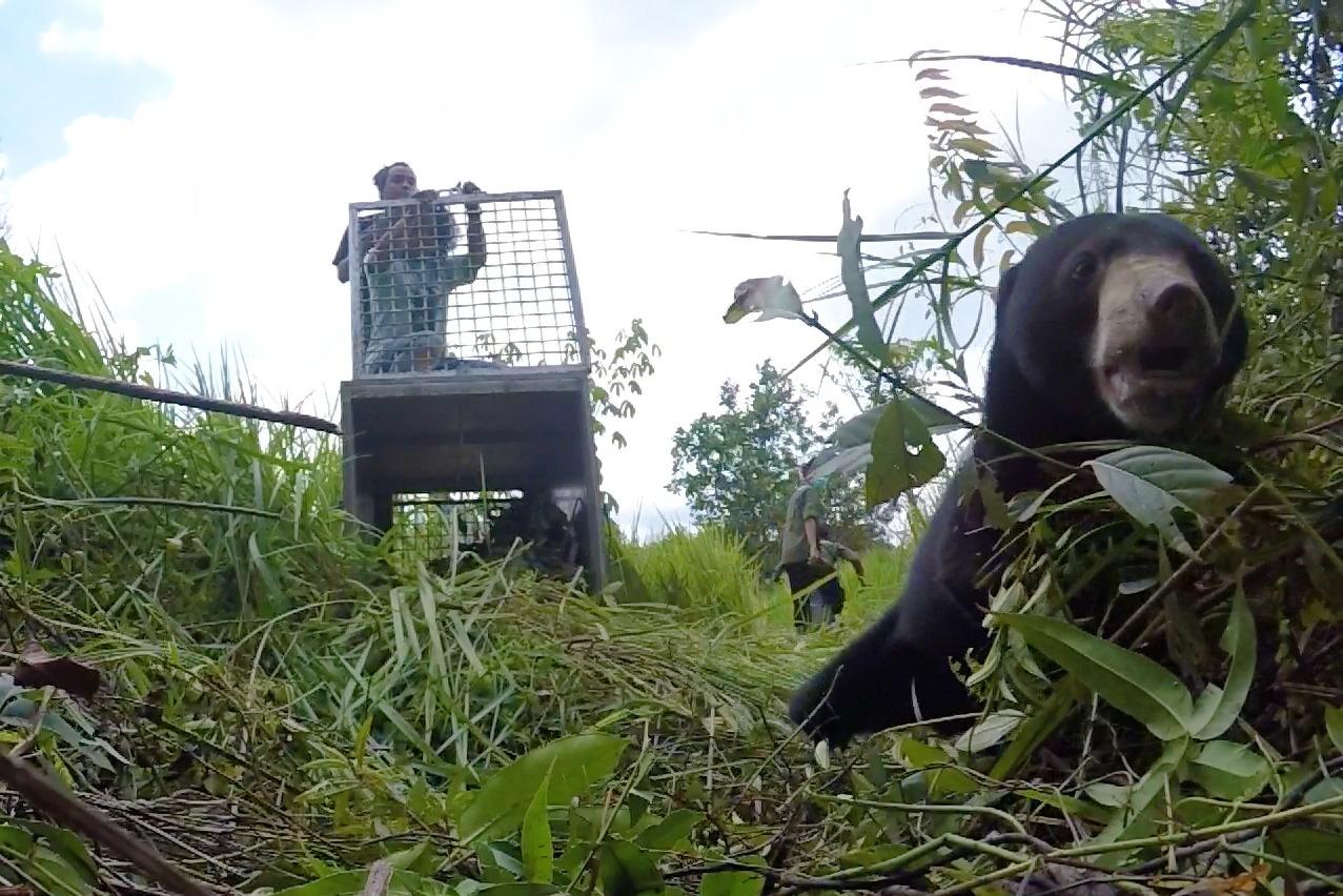 https: img.okeinfo.net content 2020 01 20 340 2155469 kisah-perjuangan-nanjung-beruang-bertangan-satu-kembali-ke-alam-liar-beB6pkBgbk.jpg