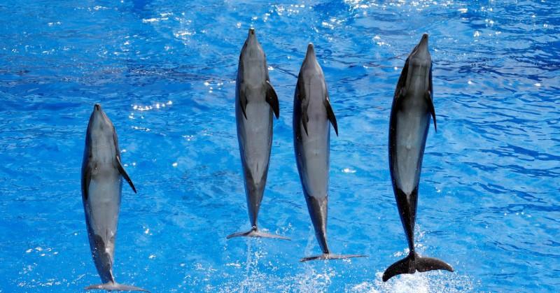 https: img.okeinfo.net content 2020 01 22 614 2156398 sains-dalam-alquran-allah-menundukkan-laut-dan-ikan-pun-berenang-dengan-sirip-DgJr5GfgxJ.jpg