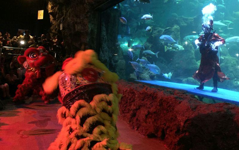 https: img.okeinfo.net content 2020 01 26 406 2158562 aksi-barongsai-menyelam-dalam-air-rayakan-imlek-usir-setan-atau-ikan-FryEYkn9cl.jpg