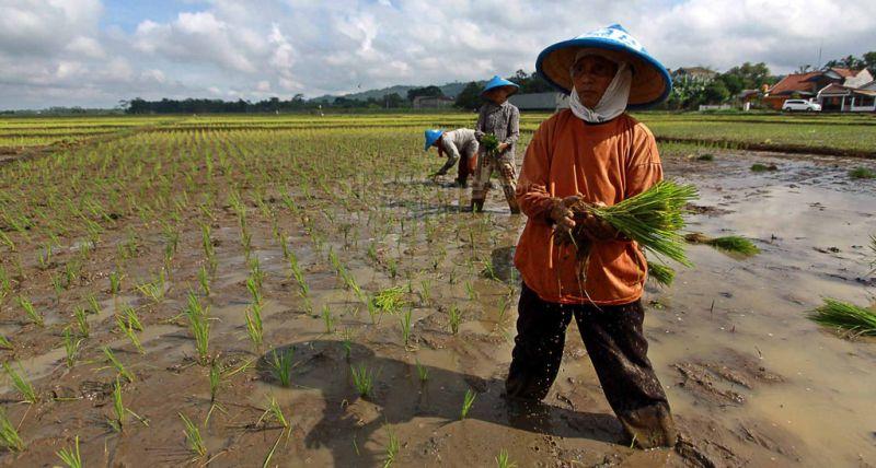https: img.okeinfo.net content 2020 02 10 1 2166284 kur-pertanian-akan-jadi-angin-segar-untuk-petani-dWpDYVRaR5.jpg