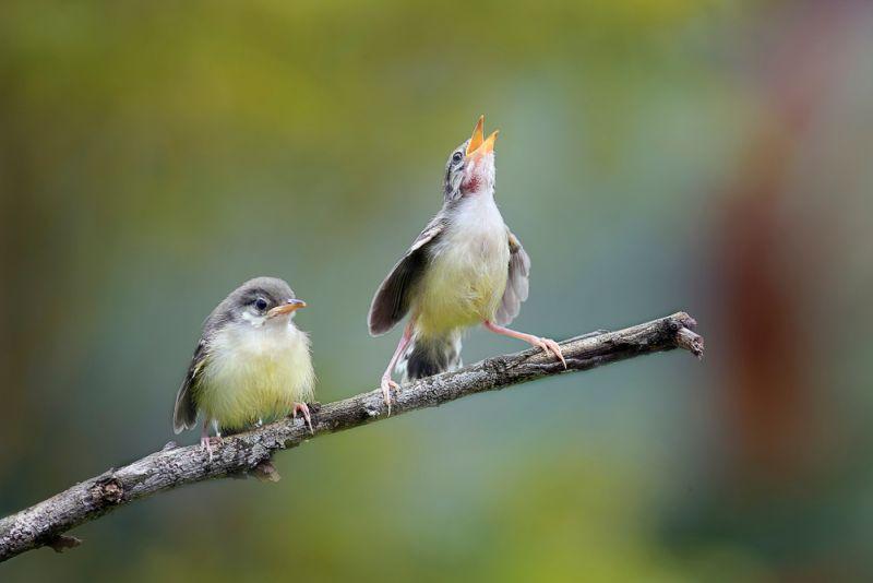 https: img.okeinfo.net content 2020 02 14 612 2168762 indonesia-punya-21-spesies-burung-baru-loh-it7Th1zNqR.jpg