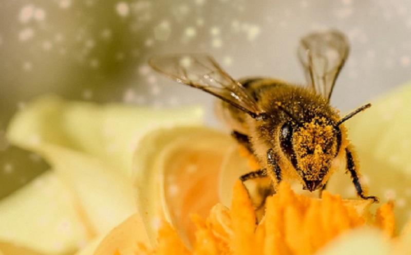 https: img.okeinfo.net content 2020 02 17 614 2169613 sains-dalam-alquran-perintah-allah-kepada-lebah-untuk-memproduksi-madu-J2oOKWite9.jpg