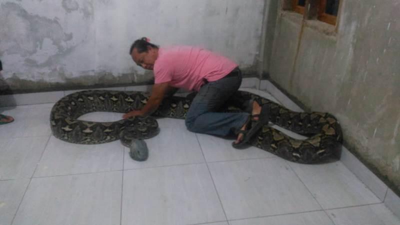 https: img.okeinfo.net content 2020 02 26 609 2174134 muncul-di-tempat-sampah-ular-raksasa-ini-bikin-geger-warga-PIUdXJBwk3.jpg