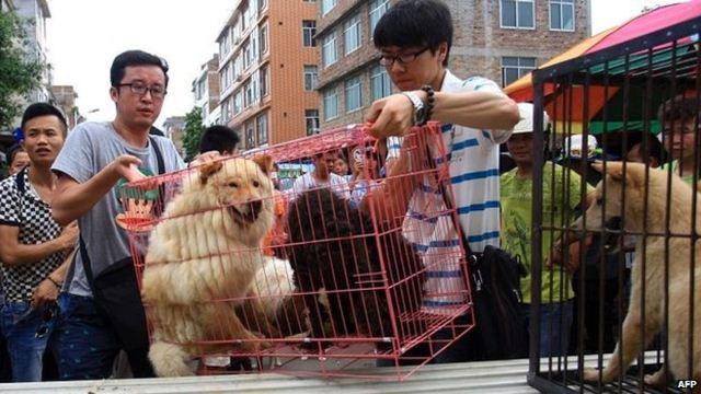 https: img.okeinfo.net content 2020 04 02 18 2193026 dampak-virus-corona-kota-shenzhen-china-larang-warga-makan-anjing-dan-kucing-QdkOxFl4Pn.jpg