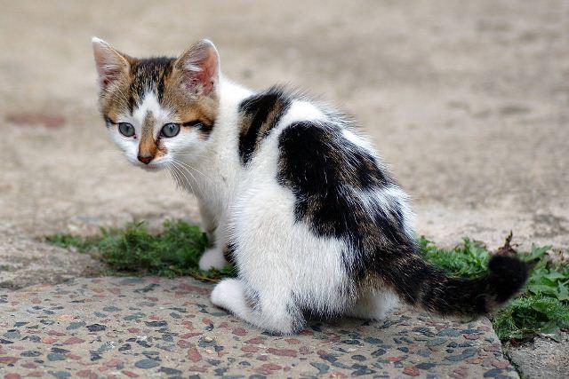 https: img.okeinfo.net content 2020 04 07 18 2195342 hewan-hewan-terpapar-virus-corona-kucing-anjing-hingga-harimau-OPszk2mZ16.jpg