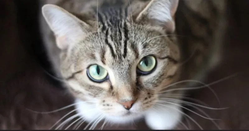 https: img.okeinfo.net content 2020 05 14 56 2214006 studi-ungkap-sesama-kucing-bisa-tularkan-virus-corona-WvTdeIEAT6.jpg