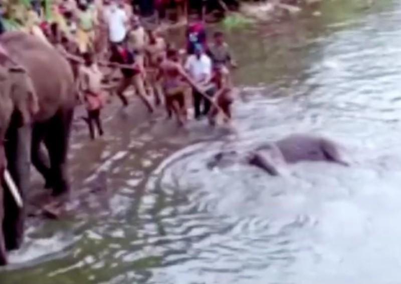 https: img.okeinfo.net content 2020 06 04 18 2224569 seekor-gajah-hamil-mati-karena-buah-berisi-petasan-timbulkan-kemarahan-di-india-1zWKKd519s.jpg