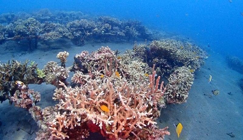 https: img.okeinfo.net content 2020 06 13 406 2229414 bangun-csc-kkp-berharap-bali-bisa-punya-coral-park-KPplvDm7G2.jpg