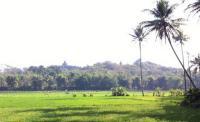 UNCOVER INDONESIA: Kangen Suasana Desa Tempo Dulu? Kampung Homestay Borobudur Jawabannya