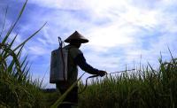 Mantap! Ulus Primawan Terima Penghargaan Petani Teladan se-Asia Pasifik dari FAO