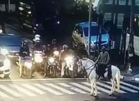 Kocak! 'Kesatria' Berkuda Kebingungan Ditegur Petugas saat Berhenti di Zebra Cross