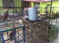 Ketika Warga Ramai-Ramai Serahkan Ular Piton, Beruang Madu hingga Orangutan ke BKSDA