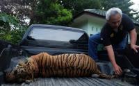 Kisah Ismail Sembiring, Tobatnya Sang Pemburu Harimau Langka
