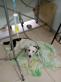 Bikin Mewek! Kisah Anjing Patah Hati Ditinggalkan Pemiliknya Hingga Mati