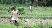 Inovasi Teknologi Kunci Ketahanan Pangan Nasional di Tengah Menyusutnya Petani