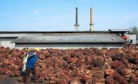 Tingkatkan Nilai Tambah CPO, Kemenperin Bentuk Balai Litbang di Pekanbaru