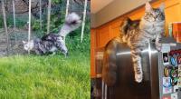 Kucing Pemegang Guinness World Records Hilang Saat Rumah Majikannya Terbakar
