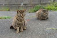 Intip Pulau Penuh Kucing Menggemaskan di Negeri Sakura