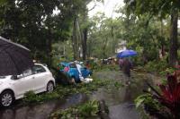 Warga Yogya Diminta Pangkas Pohon Jelang Puncak Musim Hujan