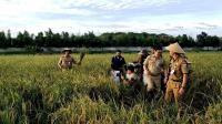 Gubernur Anies Memulai Aktivitas Selasa Pagi dengan Memanen Padi di Cakung