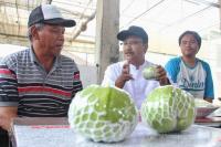 <i>Blusukan</i> di Kebun Rakyat, Gus Ipul Dorong Pertanian Organik di Jatim