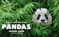 Intip Betapa Menggemaskannya Para Panda di Trailer Pandas