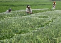 Indonesia Sasar Pasar Komoditas Pertanian Ukraina