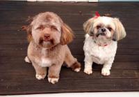 Anjing Ini Jadi Viral di Medsos karena Wajahnya Mirip Manusia!