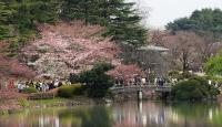 7 Destinasi yang Wajib Dikunjungi Ketika Di Jepang