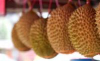 Cukup Bayar Rp50 Ribu, Nikmati Durian Sepuasnya di Desa Ini