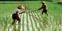 Pentingnya Inovasi dan Terobosan di Sektor Pertanian Indonesia