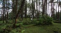Perubahan Tata Kelola Hutan Era Presiden Jokowi Disampaikan ke Dunia