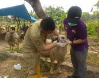 Dinas Ketahanan Pangan Tangerang Imbau Masyarakat Waspadai Hewan Kurban Sariawan