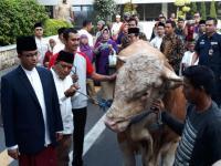 Anies Serahkan Sapi Kurban Seberat 1,2 Ton ke Masjid Fatahillah Balai Kota