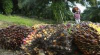 Strategi UGM Bereskan Polemik Sawit di Kawasan Hutan