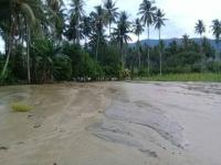 Banjir Rendam Puluhan Hektare Sawah dan Kebun Warga Sigi