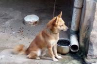 Kisah Anjing Milik Korban Pembunuhan 1 Keluarga di Bekasi yang Murung & Menangis