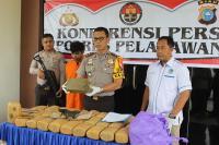 30 Kg Ganja yang Diamankan Polisi Ditanam di Samping Rumah